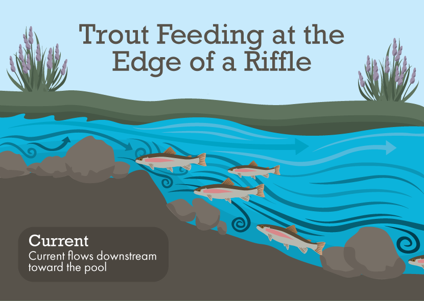 How to Locate Trout in a Stream | Fish 'n Marine Center